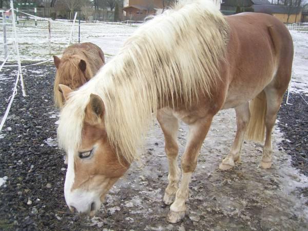 Unser neues Pferd